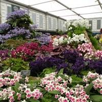 RHS Chelsea Flower Show o Freedom of London