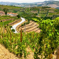 Enchanting Douro Valley CITO