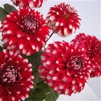 RHS Chatsworth Flower Show