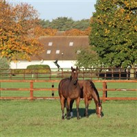 Newmarket Racing and Stud Experience