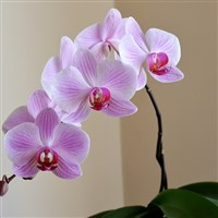 Burton's Blooming Orchids