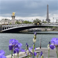 Springtime in Paris -CITO