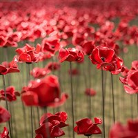 The Poppies at IWM Salford Quays