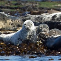 Norfolk's Seals, Coast & City