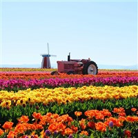 Tulips & Chocolates Cruise CITO